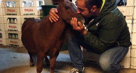 'World's smallest pony' found after theft