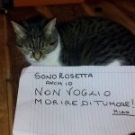 """""""My name's Rosetta and I don't want to die of cancer either! Meaow,"""" says the five-year-old feline from Aversa.Photo: Noi Ci Mettiamo La Faccia/Facebook"""