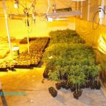 Cannabis plants were divided by different stages of growth.Photo: CC Prato