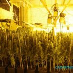 There were around 200 lamps keeping the cannabis plants warm.Photo: CC Prato