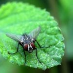 <b>'Non si sente volare una mosca'</b> To 'not even hear a fly flying' is the equivalent to the English, 'you could hear a pin drop'. It is however unlikely you will ever have to describe absolute silence in Rome or other Italian cities.Photo: siamesepuppy/Flickr