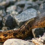 <b>'Parenti serpenti'</b> Italian families may be tight knit, but you can't choose your relations. Some Italians lament their bad relationships with their 'snake relatives'.&nbsp;Photo: Martin Cathrae/Flickr