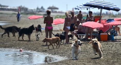 Italy's pooches play at dog-only beach