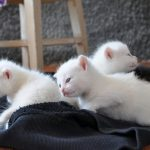 """<b>La gatta frettolosa ha fatto i gattini ciechi.</b>  Literally:  """"The hasty cat gave birth to blind kittens"""". So perhaps not the most refined way of saying that things done in haste tend to turn out badly. An English equivalent might be """"haste makes waste"""".Photo: Shutterstock"""