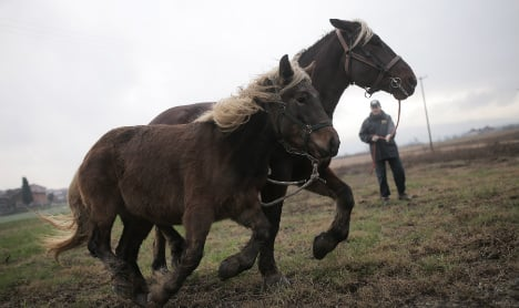Condemned horses given new lease of life in Italy