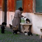 """<b>Gattara -</b> They exist in every country, but somehow there's no word for them in English. A """"gattara"""" is a woman – typically elderly – who devotes her time to looking after stray cats.Photo: Anthony Majanlahti/Flickr"""