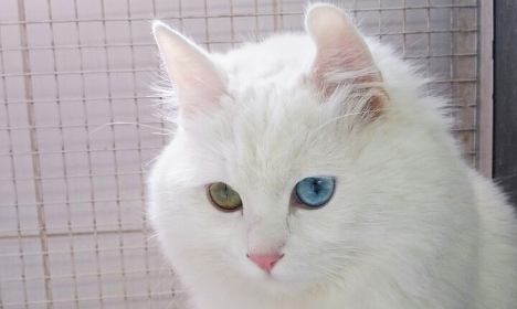Swedes rescue Syrian refugee's cat in Sicily