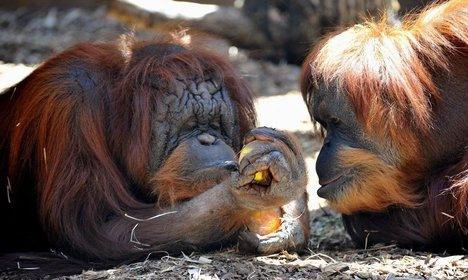 Animals cool off with ice lollies at Rome zoo