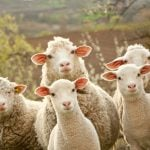 Ten wonderfully quirky Italian animal-related idioms