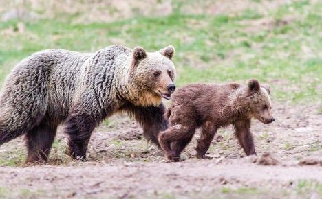 Poison probe after protected brown bear found dead in Italy