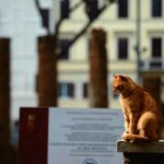Are 500,000 cats the solution to Rome's rat crisis?