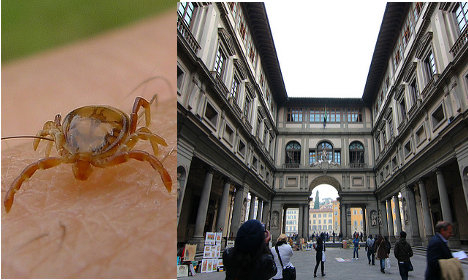 Ticks infest Italy's most famous art gallery