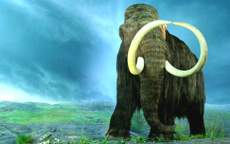 Seven-year-old finds woolly mammoth bone near River Po