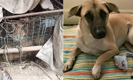This dog escaped a Thai meat market for a new life in Italy