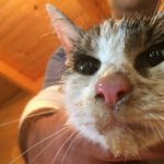 Cat pulled alive from Italy's quake rubble after five days