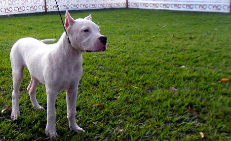 18-month-old mauled to death by family dogs in Sicily