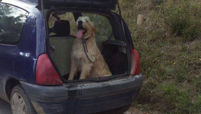 Amatrice man charged for deliberately running over his dog