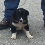 Puppy saved from quake rubble will become a rescue dog