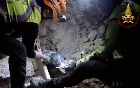 Video: Firefighters save cats and dogs from earthquake rubble