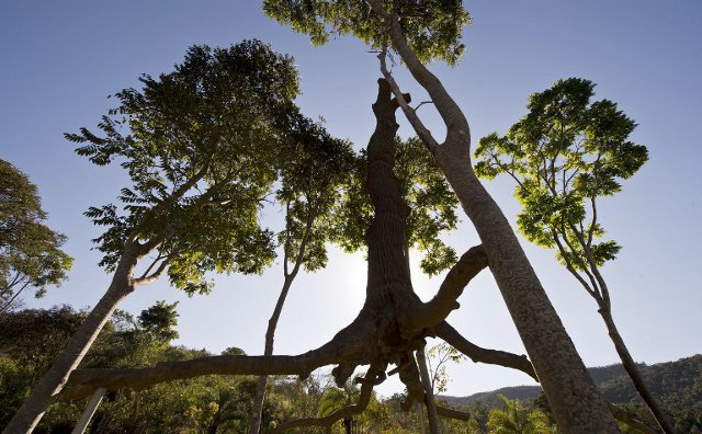 Giant tree sculptures go on show in Rome exhibition