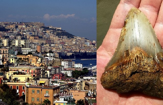 Naples man uncovers tooth believed to belong to 'prehistoric mega shark'