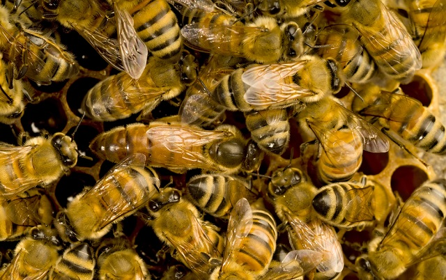 Experts called in to tackle swarming bees in central Rome square