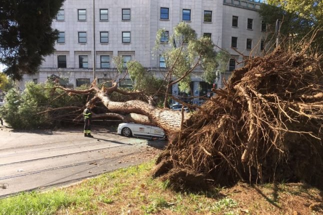 Rome's trees are falling: Toppling pine crushes taxi in latest accident