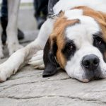 'Slob of the Day': Mayor of Bari publicly shames dirty dog owner in viral video