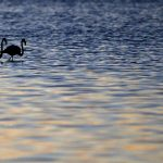 Seven places to see wild flamingos in Italy