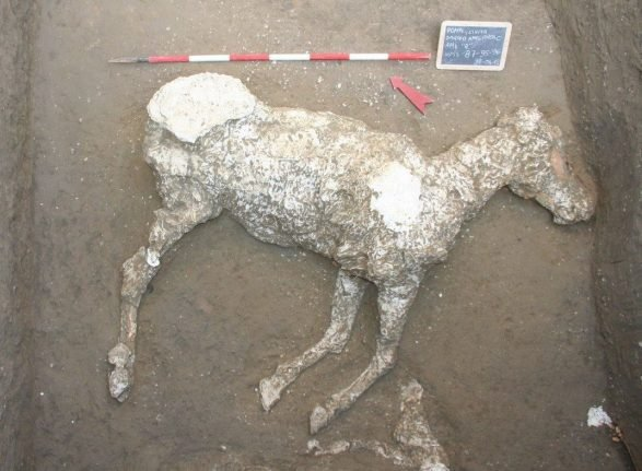Ancient remains of horse discovered at Pompeii