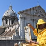Roman rooftops abuzz as beekeepers study air pollution using honey