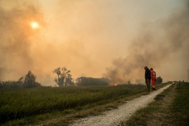 Arson suspected in Pisa forest fire