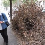 'Intolerable spectacle': Rome council takes months to remove fallen tree
