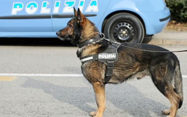 Inmate who smuggled in drugs to Italian prison in his intestines caught by sniffer dogs