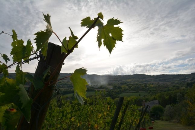 'In the US you could never do this': How an American opened his own Italian winery