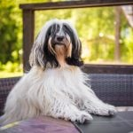 Restaurant near Vicenza welcomes dogs, if they pay a cover charge