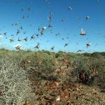 Hot weather brings plagues of insects to Sardinia and northern Italy