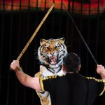 Tigers kill circus trainer in southern Italy