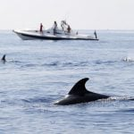 What's causing the mystery deaths of dolphins and whales off Italy's coast?