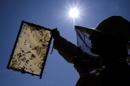 Climate crisis: Italian beekeepers suffer 'worst honey harvest ever'