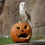 Not many carved pumpkins but a day off: What does Italy think of Halloween?