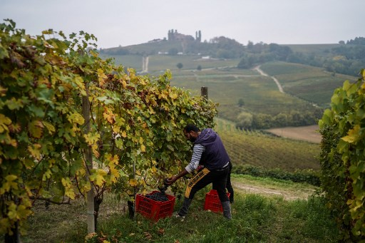 Italian wine production drops sharply after year of extreme weather