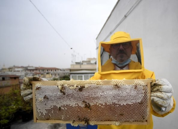 How the Italian lockdown has benefitted Rome's urban bees