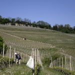 How the coronavirus crisis has hit Piedmont's wineries - and how you can help
