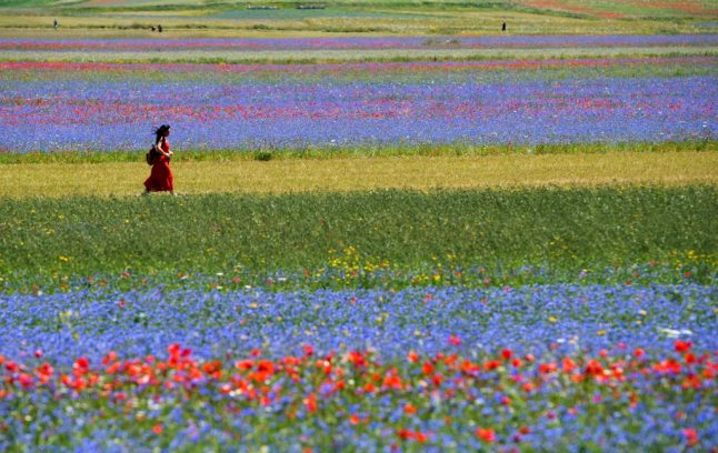 IN PHOTOS: Italian village bursts into bloom in annual 'flowering'