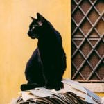 Unlucky Friday 17th - and other Italian superstitions to beware of