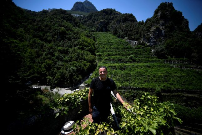 IN PICTURES: The Amalfi Coast lemon growers facing an uphill struggle to survive