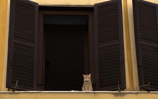 Italy's cat owners told to look out for signs of mystery 'rabies-like' virus