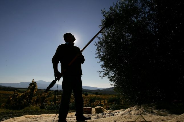 Can the olive harvest still go ahead under Italy's coronavirus restrictions?