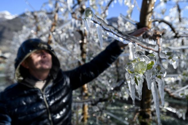 IN PHOTOS: Why Italian farms are freezing fruit trees to protect from frost